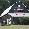 Mail Pouch Barn And Two Foxes by Jeffrey Burns
