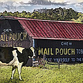 Mail Pouch Barn With Cow by Mary Almond