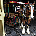 Main Street Horse And Trolley by Thomas Woolworth