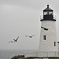 maine 11 Pemaquid Lighthouse Before Storm I by Terri Winkler