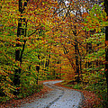 Journey Maine 55 by Terri Winkler