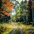 Maine Back Road by George DeLisle