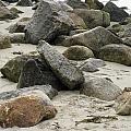 Maine Beach Rocks by Elizabeth-Anne King