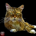 Maine Coon Cat - 3926 - Bb by James Ahn