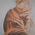 Maine Coon Cat by Gregory Murray