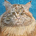 Maine Coon Cat by Kathy Marrs Chandler