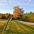 Maine Morning by Andrea Platt