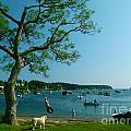 Maine Summer Day At Mackerel Cove   by Christine Stack