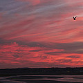 Maine Sunset by Craig Bohanan