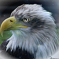 Majestic Eagle Of The Usa - Featured In Feathers And Beaks-comfortable Art And Nature Groups by Ericamaxine Price