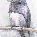 Majestic Hummingbird