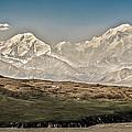 Majestic Mount Mckinley by Penny Lisowski