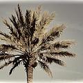 Majestic Palm by Alice Gipson