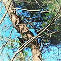 Majestic Pine Tree Abstract by Tara  Shalton