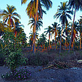 Majestic Purple Palms by Rosanne Licciardi