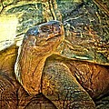 Majestic Tortoise by Alice Gipson
