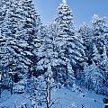 Majestic Winter Wonderland by Lois    Rivera