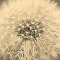 Make A Wish by Barbara Mundt