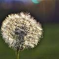 Make A Wish by Cricket Hackmann