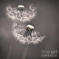 make a wish I by Priska Wettstein