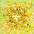 Make A Wish In Greenish Yellow by Jennifer E Doll