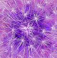 Make A Wish In Purple by Jennifer E Doll