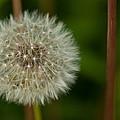 Make A Wish by Karol Livote