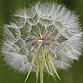 Make A Wish by Lee Kirchhevel
