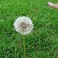 Make A Wish by Marcia B