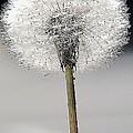 Make A Wish by Marcus Dagan
