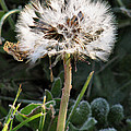 Make A Wish by Rory Sagner