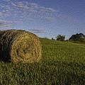 Make Hay by Sara Hudock