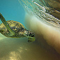 Makena Surfer by James Roemmling