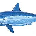 Mako Shark by Carey Chen