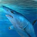 Mako Shark by Hank  Bufkin