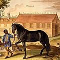 Makomilia, A Turk, Led By A Negro by Abraham Jansz. van Diepenbeke