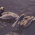 Male And Female Pelicans by Robert Floyd