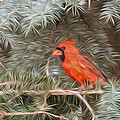 Male Cardinal In Spruce Tree by Patti Deters