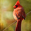 Male Cardinal In The Sun - Digital Paint by Debbie Portwood