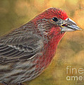 Male Finch With Seed by Debbie Portwood