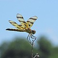 Male Halloween Pennant by Eric Noa