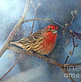 Male House Finch With Blue Texture by Debbie Portwood