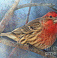 Male Housefinch Close View by Debbie Portwood