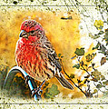 Male Housefinch Photoart by Debbie Portwood