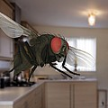 Male Lesser Housefly In Flight, Sem by Power And Syred