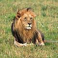 Male Lion On The Masai Mara by Aidan Moran