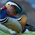 Male Mandarin Duck-signed-#8301 by J L Woody Wooden