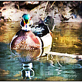 Male Wood Duck with Texture