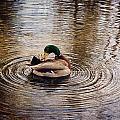 Mallard Duck by Maria Angelica Maira