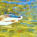 Mallard Duck by Marilyn Diaz